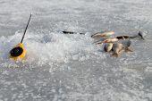 foto of ice fishing  - Ice fishing - JPG