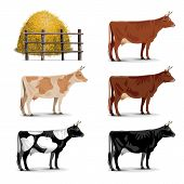 stock photo of cattle breeding  - Cow Icons including five cows of different colors and haystack - JPG