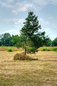 picture of dry grass  - Tree on field with dried grass with bushes and woods at background - JPG