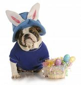 stock photo of easter basket eggs  - easter dog  - JPG
