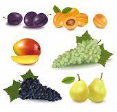 Super gran grupo de frutas. Ilustración de vector fotorrealistas.