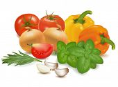 The colorful group of vegetables. Photo-realistic vector.