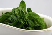 Fresh Basil In White Bowl