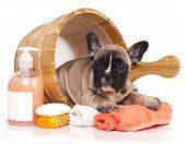 dog grooming, washing poster