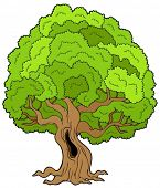 Big Leafy Tree