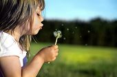 foto of dandelion  - Beautiful little girl blowing dandelion - JPG