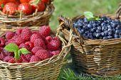 morango, framboesa, mirtilo e frutos de Verão