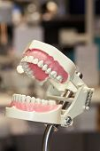 COLOGNE - MARCH 22: New display model of human teeth at the FRASACO booth at the IDS Dental Industry trade show in Cologne, Germany on March 22, 2011.