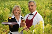 two wine waiters posing in vineyards
