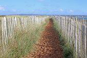 Path Through Sand Dunes On Dawlish Warren Beach, Devon poster