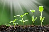 Agriculture. Growing Plants. Plant Seedling. Hand Nurturing And Watering Young Baby Plants Growing I poster