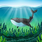 Cartoon Littlr Whale Swim In The Sea poster