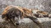 Old Mutt Sleeping Outdoors In A Stone Bench. A Sad And Senior Stray Dog Abandoned In The Streets. poster