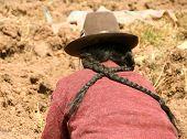 Cosecha de la papa en los Andes del Perú