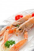 stock photo of norway lobster  - norway lobster with tomatoes and lemon on dish - JPG