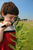 Investigating Nature Closeup