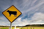 Country Fields And Cow Sign