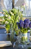 Decoration Of Dining Table.  Bouquet Of  Hyacinth In Vase Of Glass.