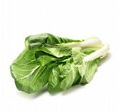 pak choi isolated on white background with shadow