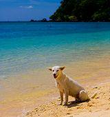 Salzigen Meer Hund am Strand