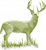Woodcut Deer