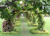 A Tunnel Made Of Vines Makes A Shady Walk In An English Garden