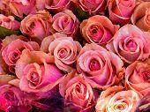 viele rosa Rosen auf einem Blumenmarkt, wartet auf einen Käufer