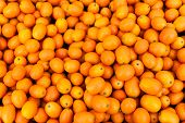 pic of loquat  - Horizontal shot of ripe kumquats in abundance at the farmer