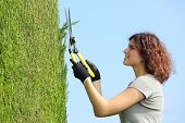 Gardener Woman Pruning A Cypress With Pruning Shears