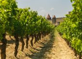 Medieval Town Of Carcassonne And Vineyards poster
