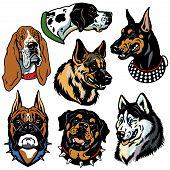 Dogs Heads Set