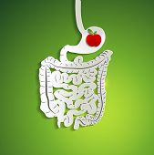 stock photo of belly-ache  - Apple in human stomach medical illustration of stomach colon and small intestines - JPG