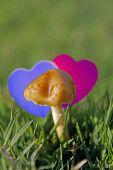 Orange Mushroom