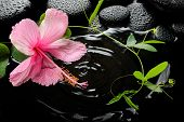 Beautiful Spa Concept  Of Pink Hibiscus, Green Tendril Passionflower And Zen Stones With Drops, On R