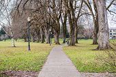 image of elm  - Pedestrian path through heritage elms on historic lower campus - JPG