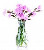 Beautiful lilac flowers in vase isolated on white