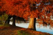 Nice Warm Sun On Trees At Lakeside