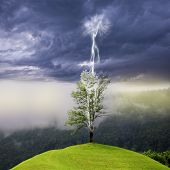Tree on the hill struck by lightning.