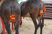 Drag Mules Decoration