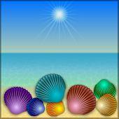 pic of beach shell art  - Vector abstract shells illustration on the summer sea beach - JPG