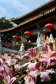 Close up photo of pink flowers near buddhist temple in Hong Kong