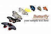 Beautiful butterflies, isolated on white