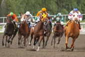 Thoroughbreds Race Around The Turn