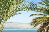 pic of golan-heights  - Kinneret lake or Galilee sea and Golan Heights in the palm leaves with clear blue sky - JPG