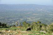 Jamaican Hills