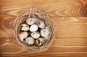 picture of quail egg  - Quail eggs nest over wooden table background - JPG