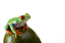 stock photo of red eye tree frog  - Green Frog Sitting on fruit isolated on white background - JPG