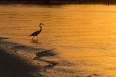 Egret Sihouette