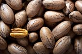 foto of pecan tree  - Pecan nuts in and out of shells - JPG