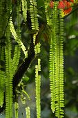 grüne Pflanzen in der Nähe von Agua Azul in Mexiko